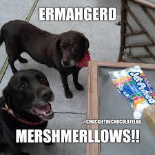 Ermahgerd Animal Memes - ermahgerd imgflip