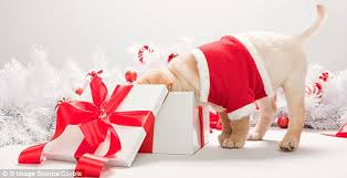 pet christmas christmas pets get more presents than partners say pets at home