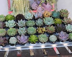 Flower Pot Wedding Favors - the succulent source by thesucculentsource on etsy
