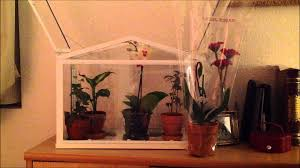 my indoor greenhouse terrarium youtube