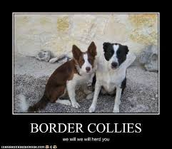 Border Collie Meme - nice border collie meme 80 skiparty wallpaper