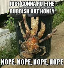 Nope Meme - its a coconut crab nope meme by bumplummer memedroid