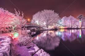 winter park christmas lights winter lights bowring park christmas public holidays pixoto
