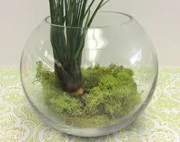 bowl terrarium etsy