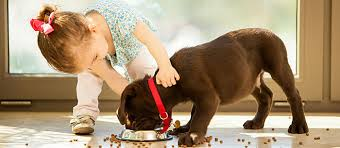 dog food reviews what u0027s best for your dog care com community