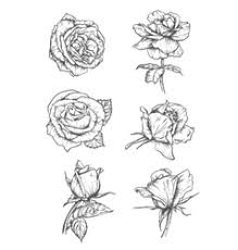 rose tattoo royalty free vector image vectorstock