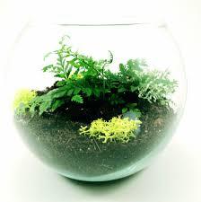 blog u2014 roosevelt u0027s terrariums