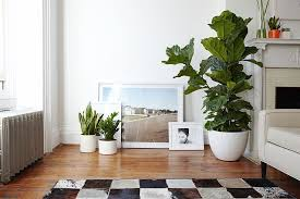 home interior plants how to decor your home with indoor plants creative ideas