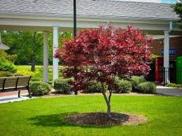 trees and shrubs on a lawn tree service experts