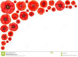 red poppy flower stock images image 25561484