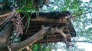 Treehouse Living Living In A Treehouse Sri Lanka Youtube