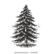 fir tree stock images royalty free images vectors