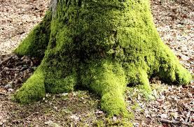 tree fungus and moss hunker