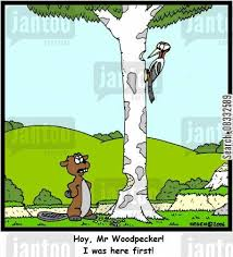 woodpecker cartoons humor jantoo cartoons