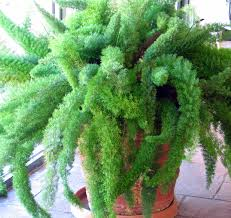 Low Light Indoor Plants by Low Light Houseplant Google Search Houseplants Love Love