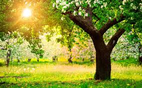 field beautiful nature fields splendor sun place green tree