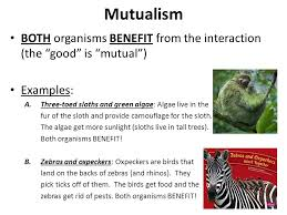 symbiotic relationships ppt download
