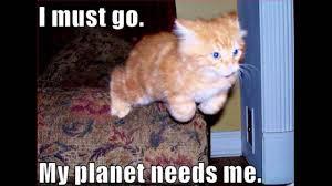 Lol Cat Meme - lolcat compilation 2014 youtube