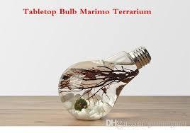 roller ball table top tabletop marimo vase marimo bulb terrarium underwater aquarium with