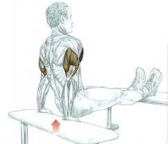 Triceps Bench Dips Bodybuilder Workouts To Build The Biceps And Triceps All