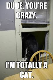 Confused Dog Meme - dude you re crazy i m totally a cat a confused dog says