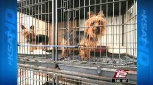 new texas law regulates animal breeders