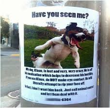 Lost Dog Meme - 12 funniest lost found pet signs lost signs pet signs