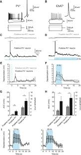 synergy of direct and indirect cholinergic septo hippocampal