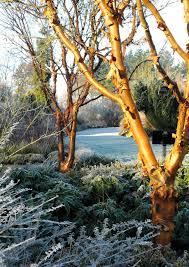 spectacular winter gardens to visit the english garden