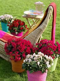 pflanzen fã r den balkon überraschend draußen zimmerpflanzen zur sommerfrische auf balkon
