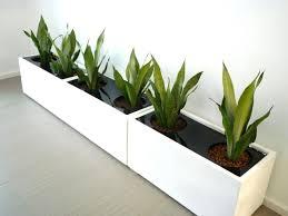 premium fiberglass planter box white plants pinterest