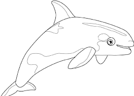 free printable whale coloring pages kids