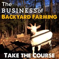 the business of backyard farming homesteady