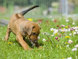 backyards series part 3 friendly plants your pooch will