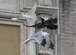 tarocchi gabbiano segni dal cielo le colombe e i gabbiani di papa francesco