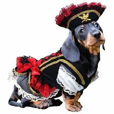 Halloween Dogs Costumes Pirate Halloween Dog Costume