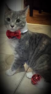 review petco premium cat bungalow u2013 caseywasthere