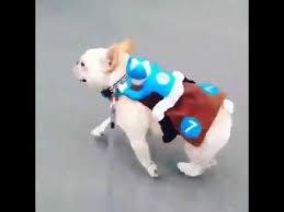 Horse Jockey Halloween Costume Latest Halloween Costume Dog Cowboy Jockey Riding