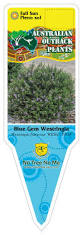 native plants australia list our plant list u2014 australian outback plants native plant nursery