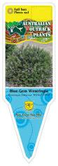 native plants australia list our plant list u2014 australian outback plants native plant nursery