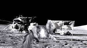 maine coon cat on the moon
