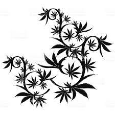 vector cannabis leaf silhouette on white background marijuana