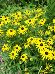 native plants for sale south central pennsylvania native plants garden housecalls