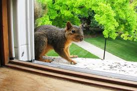 How To Get Rid Of Raccoons In Backyard How To Get Rid Of Squirrels Squirrel Removal Tips Houselogic