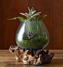 how to make a terrarium west elm