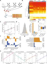 multi tissue dna methylation age predictor in mouse genome