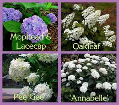 Names And Images Of Flowers - hydrangea identification