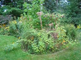 michigan native plant nursery plantwise native landscapes and ecological restoration