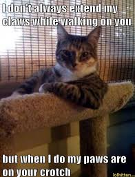 Funny Massage Memes - lolkitten we can t get no catisfaction lolcats kittehs and funny