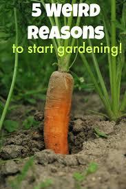 5 unusual reasons to build a backyard garden